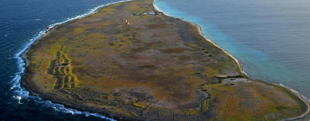 klein-Curacao zeikant